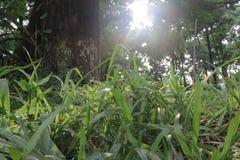 Zonlicht op het gras stock afbeeldingen