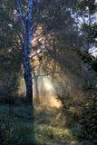 Zonlicht in schilderachtig bos Royalty-vrije Stock Afbeeldingen