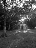 Zonlicht in zwart-wit bos - Royalty-vrije Stock Foto's