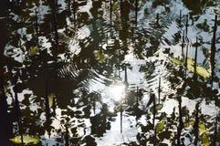 Zonlichtbezinning en rimpeling op water in mangrovebos Royalty-vrije Stock Afbeelding