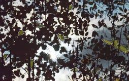 Zonlichtbezinning en rimpeling op water in mangrovebos Stock Afbeelding