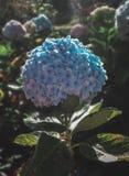Zonlichtdalingen op de bloemblaadjes van de bloem royalty-vrije stock afbeelding