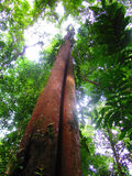 Zonlichtochtend in het bos Stock Foto's