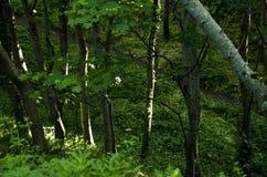 Zonlichtplakken door de bomen Stock Fotografie