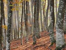 Zonne de herfstochtend in hout stock afbeeldingen