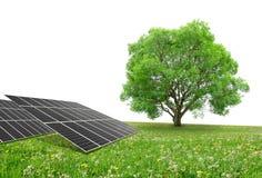 Zonne-energiepanelen met boom Stock Foto