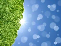 Zonne gloed en groen blad vector illustratie