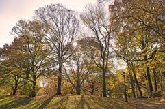 Zonne stralen die tot de manier maken door bomen royalty-vrije stock fotografie