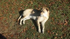 Zonnebadende Hond Stock Fotografie