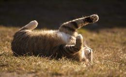 Zonnebadende kat Stock Foto