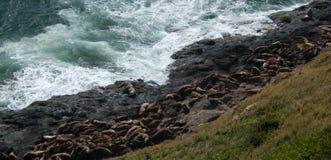 Zonnebadende zeeleeuwen stock foto's
