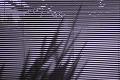 Zonneblinden en boomschaduw Royalty-vrije Stock Afbeelding