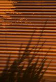 Zonneblinden en boomschaduw Royalty-vrije Stock Fotografie