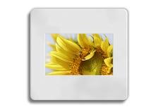 Zonnebloem 35mm frame Royalty-vrije Stock Afbeeldingen