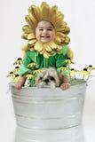Zonnebloem baby4 Stock Afbeeldingen