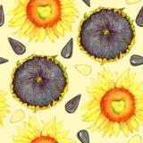 Zonnebloem bloeiend, rijpe hoofd en zaden vector illustratie