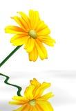 Zonnebloem die in water wordt weerspiegeld Royalty-vrije Stock Afbeeldingen
