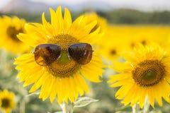 Zonnebloem die Zonnebril dragen stock fotografie