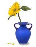 Zonnebloem in een blauwe vaas Royalty-vrije Stock Foto