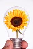Zonnebloem in een gloeilamp Stock Afbeeldingen