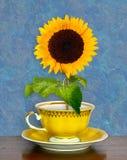 Zonnebloem in een kop Royalty-vrije Stock Afbeeldingen