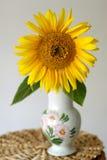 Zonnebloem in een vaas royalty-vrije stock afbeelding