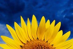 Zonnebloem en bewolkte hemel Stock Fotografie
