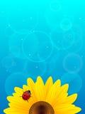 Zonnebloem en onzelieveheersbeestje op blauwe achtergrond. Royalty-vrije Stock Afbeelding