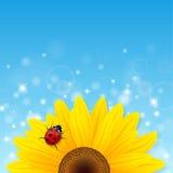 Zonnebloem en onzelieveheersbeestje op blauwe achtergrond Stock Afbeelding