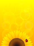 Zonnebloem en onzelieveheersbeestje op gele achtergrond. Royalty-vrije Stock Afbeelding