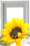 Zonnebloem en picutue frame Stock Foto's