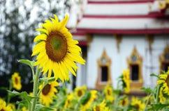 Zonnebloem en Tempelachtergrond Royalty-vrije Stock Foto's