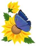 Zonnebloem en vlinder Royalty-vrije Stock Afbeeldingen