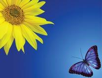 Zonnebloem en vlinder Stock Afbeeldingen