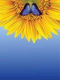 Zonnebloem en vlinder Royalty-vrije Stock Fotografie