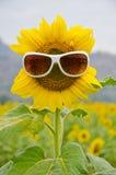 Zonnebloem en zonnebril Stock Foto's