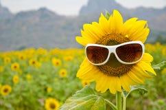 Zonnebloem en zonnebril Stock Fotografie