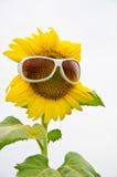 Zonnebloem en zonnebril Royalty-vrije Stock Foto's