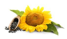 Zonnebloem met bladeren en zaden stock afbeeldingen