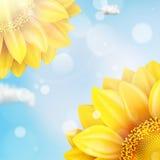 Zonnebloem met blauwe hemel - de herfst Eps 10 Stock Afbeelding