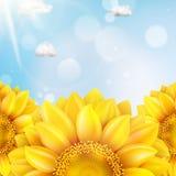 Zonnebloem met blauwe hemel - de herfst Eps 10 Stock Foto's