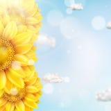 Zonnebloem met blauwe hemel - de herfst Eps 10 Stock Afbeeldingen