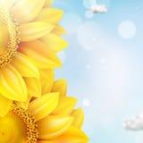 Zonnebloem met blauwe hemel - de herfst Eps 10 Royalty-vrije Stock Afbeelding