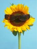 Zonnebloem met zonnebril Royalty-vrije Stock Foto's
