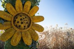Zonnebloem op een Gebied stock afbeelding