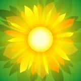 Zonnebloem op groen (achtergrond) Royalty-vrije Stock Foto