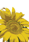 Zonnebloem op Witte Achtergrond Stock Illustratie