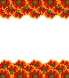 Zonnebloem op witte achtergrond Royalty-vrije Stock Fotografie
