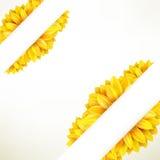 Zonnebloem op witte achtergrond Eps 10 Royalty-vrije Stock Foto's
