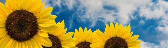 Zonnebloembloem tegen de hemel met wolken Stock Fotografie
